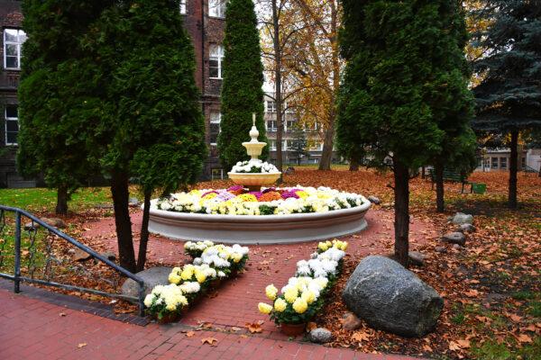 Kwiaty ozdobiły park Szpitala